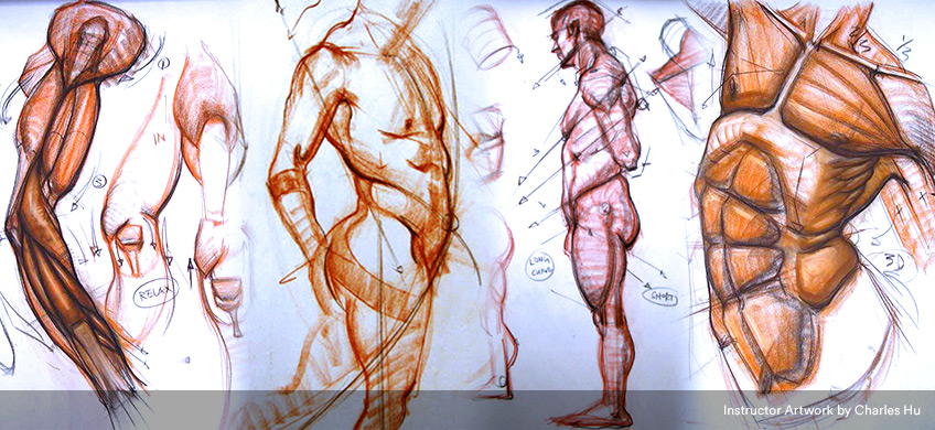 Anatomy for Artists | Gnomon